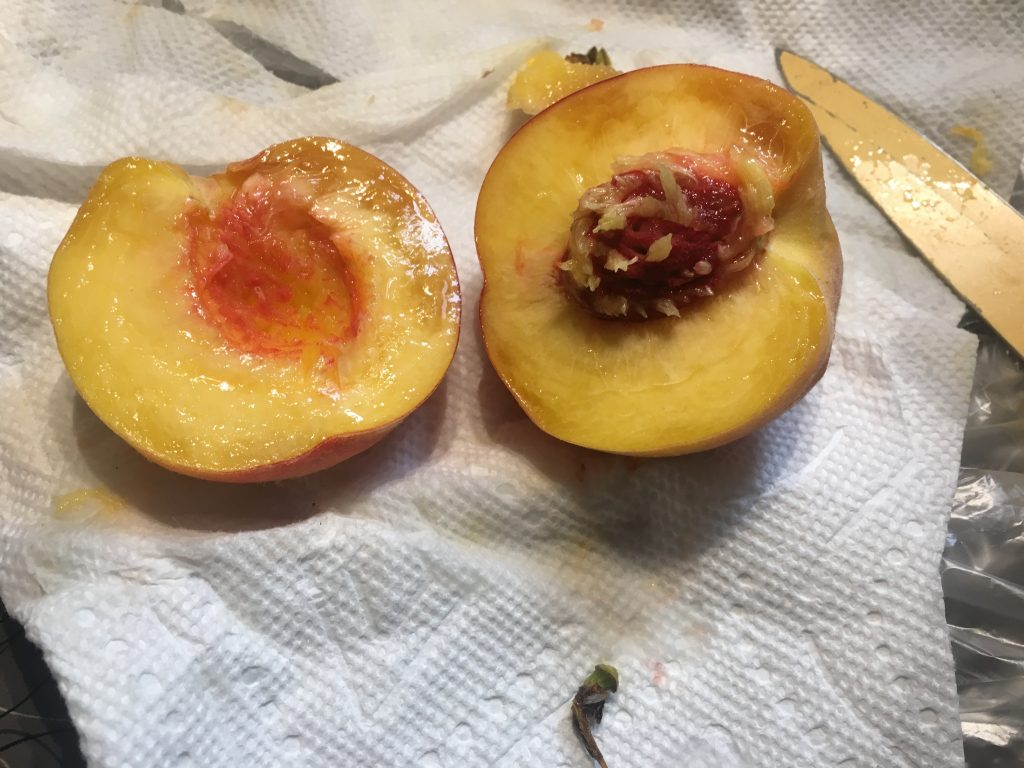 pitted peaches on a paper towel